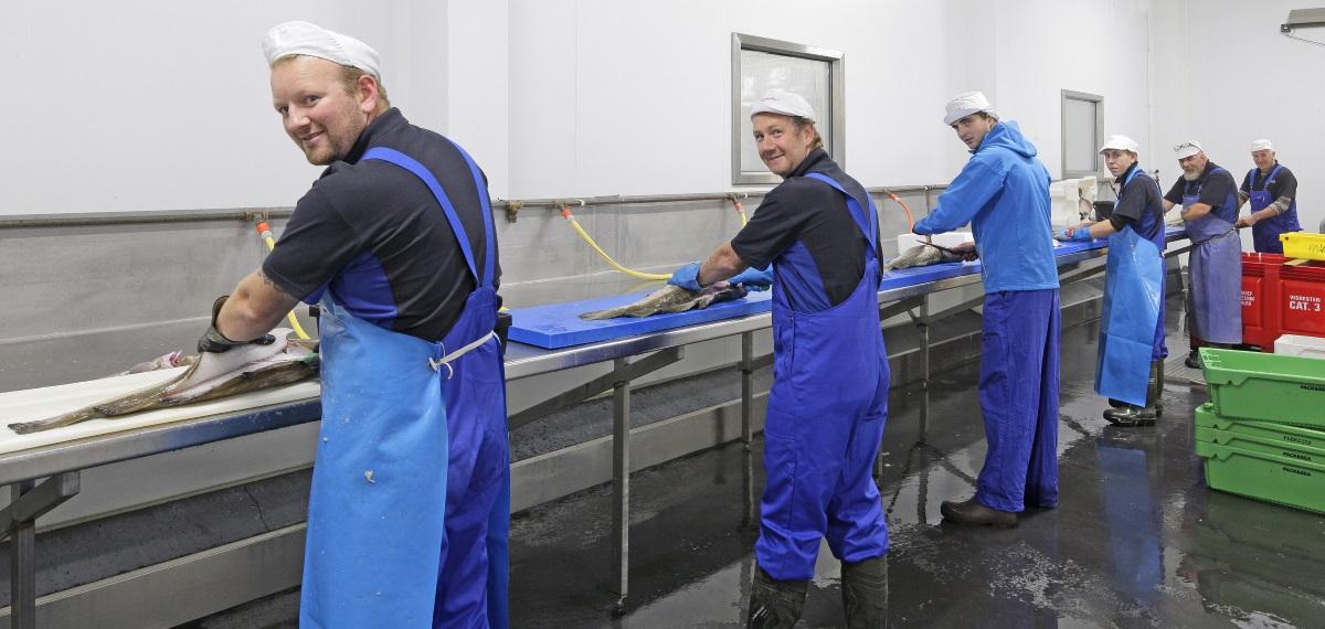 vis-fileren-zeevisgroothandel-langbroek