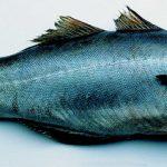 koolvis-zwart